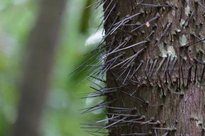 Botanic Gardens : il vaut mieux ne pas s'appuyer sur certains arbres